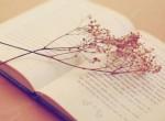 Стихи о Силламяэ  / luuletused Sillamäest